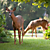 Deer in front yard