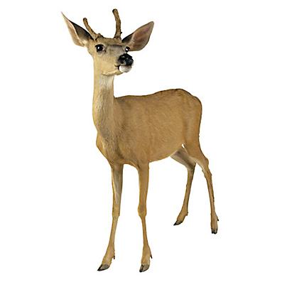 How To Get Rid Of Deer Deer Damage Havahart 174