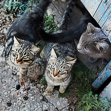 Stray cats feral cats