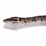Be ready for snake season