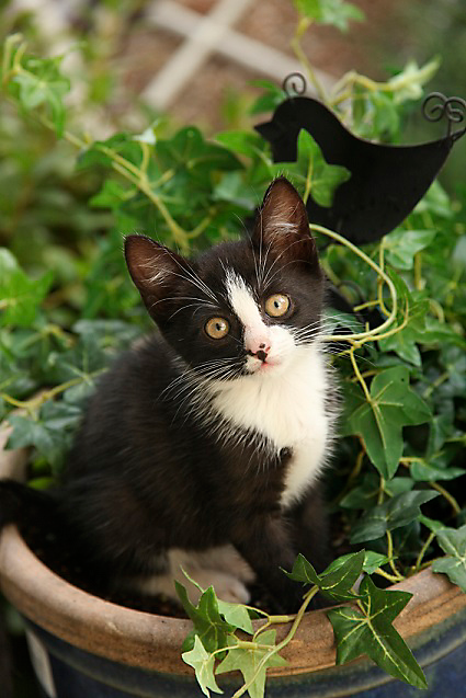 kitten in potted plant