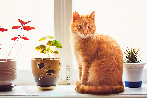cat next to potted plants