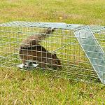 Humane Trap & Release Methods