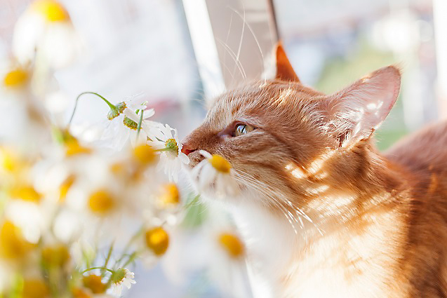 cat smelling flower