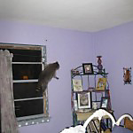 raccoon in bedroom window
